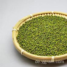 Großhandel Landwirtschaftsprodukte Hochwertige Körner Mungobohnen