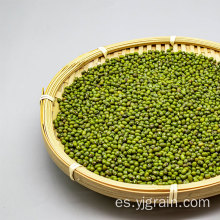 Productos agrícolas al por mayor de granos de alta calidad de frijol mungo