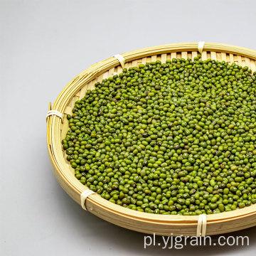 Sprzedaż hurtowa produktów rolniczych Wysokiej jakości ziarna fasoli mung