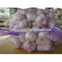 fresh shandong garlic