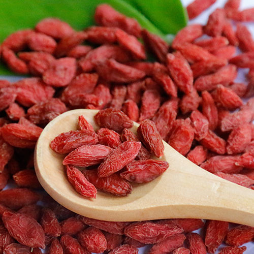 organic goji berry seeds
