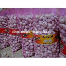 chinese pink garlic