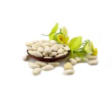 Tipos de feijão branco Long Shape Crop 2017