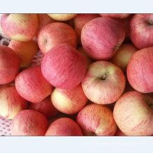 Qualidade padrão de exportação de Qinguan fresco Apple