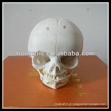 Modelo de crânio infantil anatômico ISO, modelo de crânio anatômico