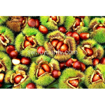 High Quality Dandong Origin Chestnut