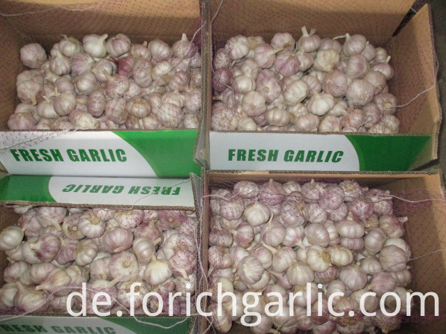 Garlic Crop 2019