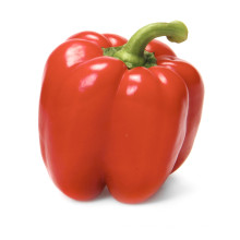 2021 New Harvest Export Natural Hot Selling Good Chinese Fresh Bell Pepper