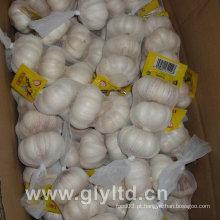 Alho branco normal com saco de malha (4,5 cm e mais)