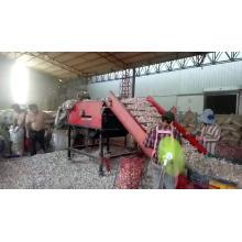 a fábrica fornece diretamente o alho fresco da categoria superior