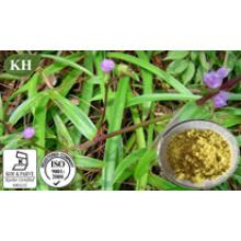 Alta calidad y competitivo Cyanotis Arachnoidea Extracto Beta ~ Ecdysone 10% ~ 98%;