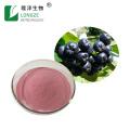 Fonte de fábrica aronia chockberry fruta em pó pó de aronia