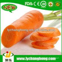 2014 Carrot Price