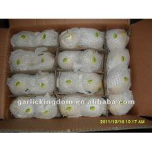 Ya Pear (96pcs saco de papel de embalagem em 17kg ctn)