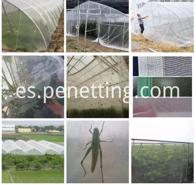 insect net application