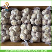 Processing 2016 Crop Garlic 5.0cm