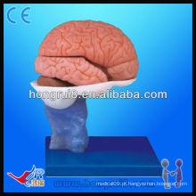 Modelo avançado de vida modelo de anatomia do cérebro de PVC modelo de cérebro humano de alta qualidade