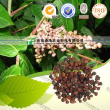 Natural Herbal Plant Raw Material Gallnut