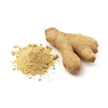 ginger powder organically source