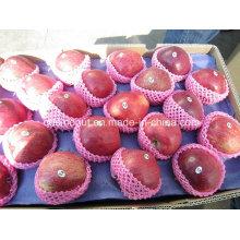 Nuevo Cultivo Huaniu Apple