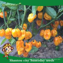 Suntoday Gemüse Hybrid F1 Organic up Paprika eingelegte Jalapeno gelbe Samen f1 Chili hebanero Samen Gemüse (22020)