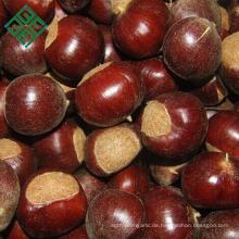 konservierte frische Kastanien Nüsse zum Verkauf