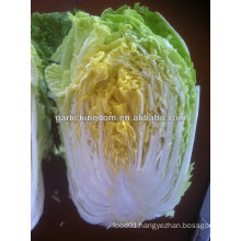 sell new crop fresh Chinese Cabbage from Good Farmer