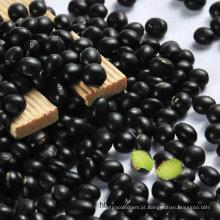 Feijão preto com origem de grãos verdes na China
