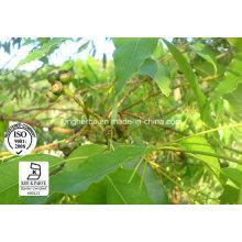 Meilleur qualité Eucalyptus Huile Cineole 80%
