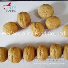 Good Price Walnut with Shell Chinese Walnut