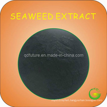 Brown Seaweed Extract Powder