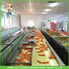 New Crop Chinese Juice Fresh Carrot