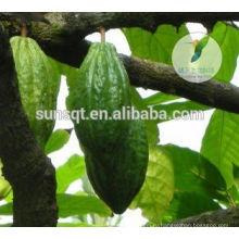 Повышение продукты секса увеличение пениса сырые какао порошок
