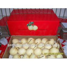 Fresh Ya Pear / Nova safra preço da pêra / Pera chinesa por atacado