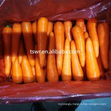 new crop high quality fresh carrots
