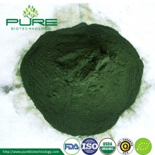 Spray kering Organik Spirulina Powder