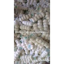 Pure White Garlic (5P/BAG)