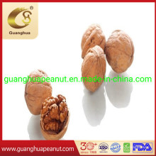 Good Quality and New Crop Walnut in Shell