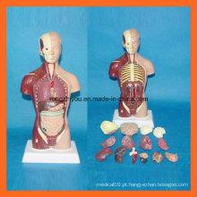 28 Cm Modelo de torso humano com 15 partes do modelo anatômico humano