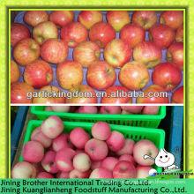 China red gala apple exportador