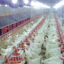 Полный комплект оборудование птицефабрики по производству куриных