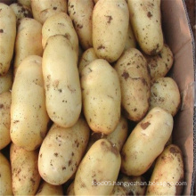 2015 Fresh Chinese Potato (150G AND UP)
