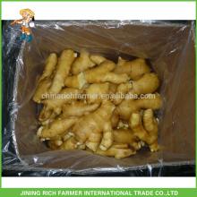Verduras frescas de jengibre chino jengibre fresco 150g en el cartón