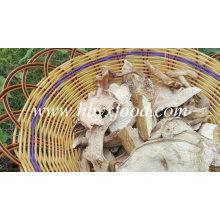 Grade B Dried White Porcini Mushroom with Best Price