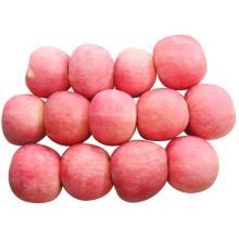 Neue Ernte zum Verkauf Frischer FUJI Apfel