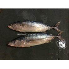 Pescado fresco congelado de IQF Bonito Fish