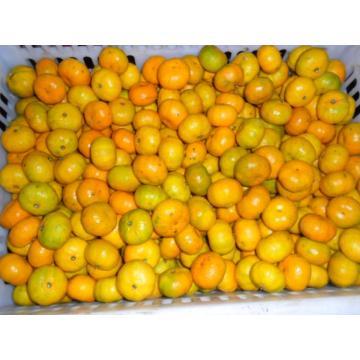 Naranjas mandarinas frescas Sweet Baby 3 - 5,5 cm, 10,58 g Suga No de modelo: O104 Mín. Pedido: 1 Mandarinas frescas Sweet Baby 3 - 5,5 cm, 10,58 g Azúcares, Fruta fresca Detalle rápido: Estilo: Fresco Tipo de producto: Fruta cítrica Tipo: Naranja Tipo de