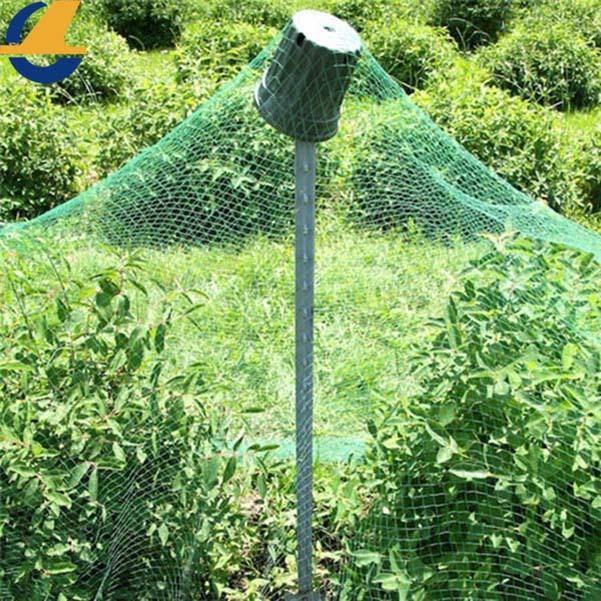 fence screen plants