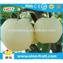 Поставщик золотых груш в Китае