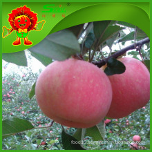 Types of apples Chinese Fuji Apple